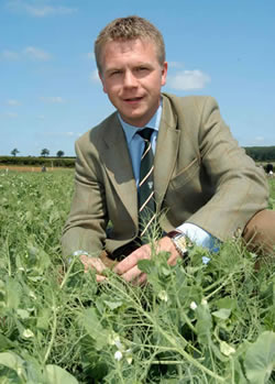Winning the challenge of profitable pea agronomy