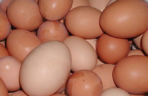 US egg producers accused of price fixing