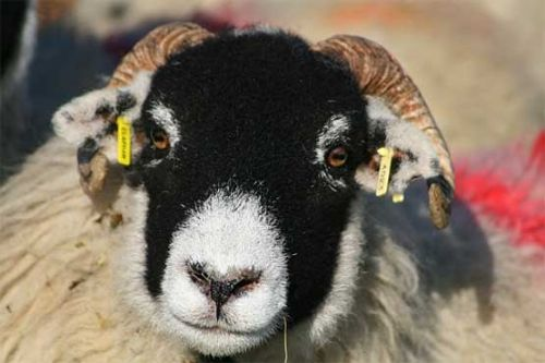 More EID reforms needed, say UK farming unions