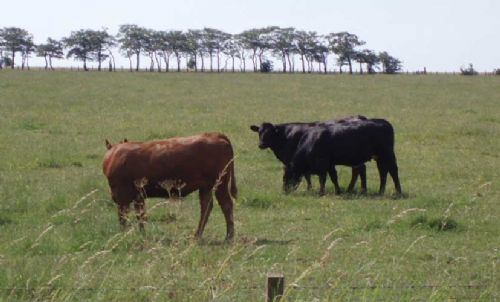 NBA highlights rule change for TB affected farms