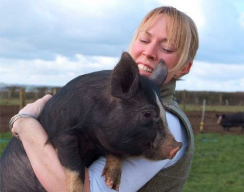 This little (rare breed) pig went to mar...