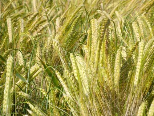 EU should abolish farm subsidies, research shows