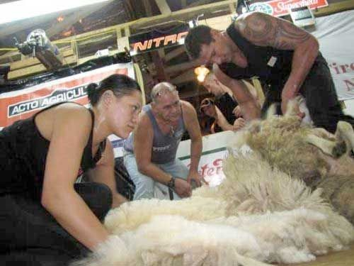 World shearing champs set for Ireland in 2014