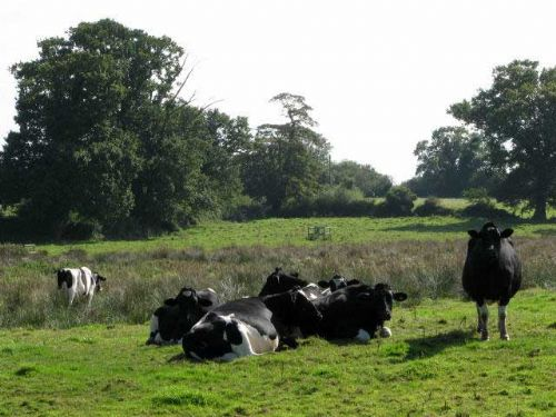 Welsh milk production under the spotlight