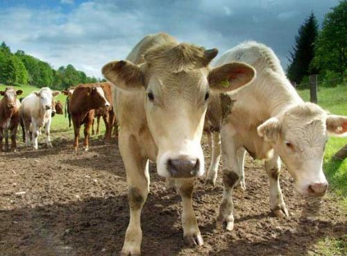 US moves on UK beef 'positive', say NFU