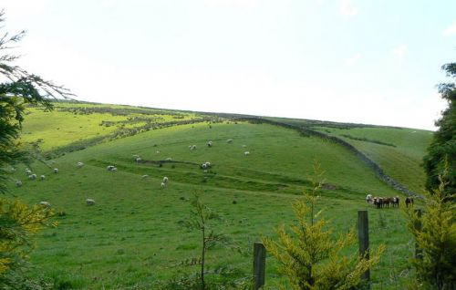 New income vital for Uplands future - CLA