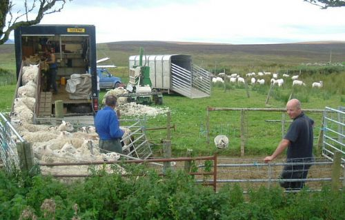Wool payments set to increase