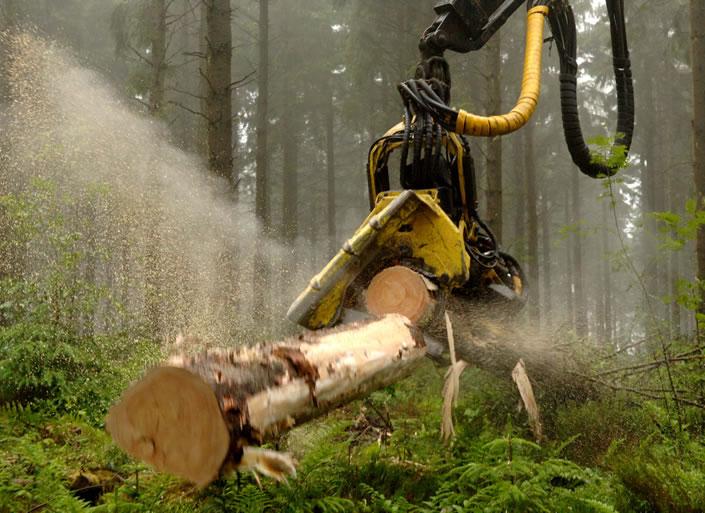 Scottish timber industry enjoying boom time