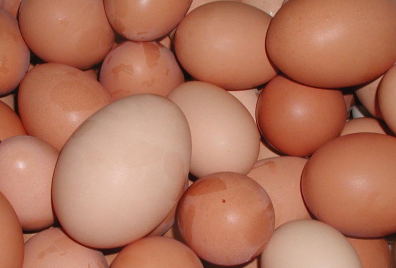 More dioxins found in German eggs