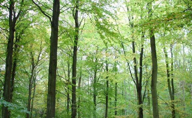 Advisers warn against public forest sell-off