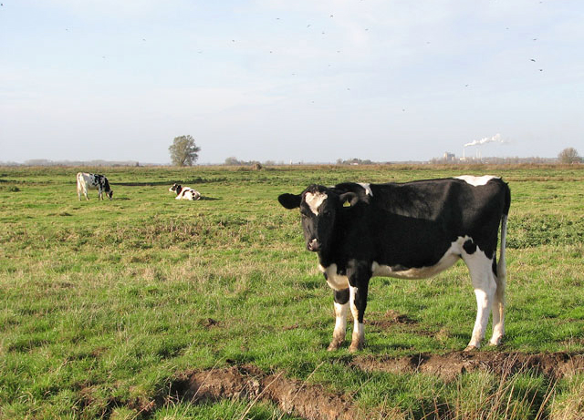 Farmers concerned about future of dairy