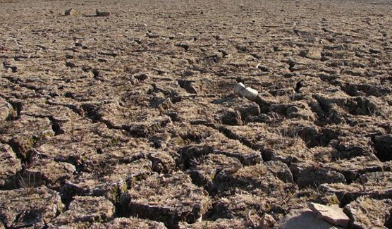 US drought affecting global prices