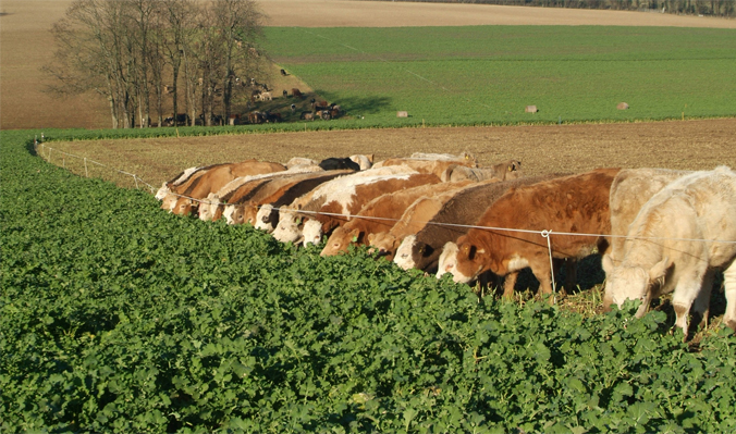 August Sown Crops Could Ease Winter Forage Shortages