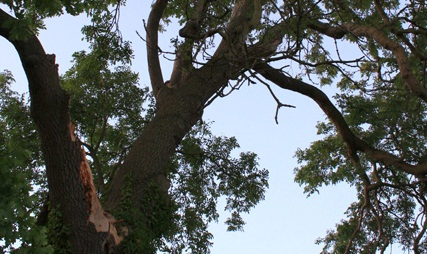 Ash tree import ban would not be enough say campaigners