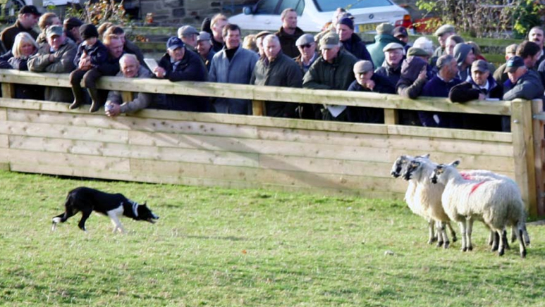 World record sheep dog price at Skipton