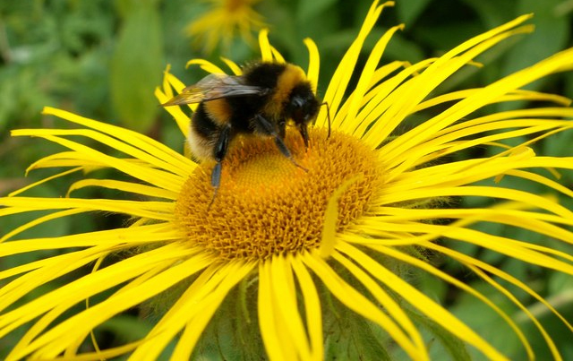Government to combat declining bee population