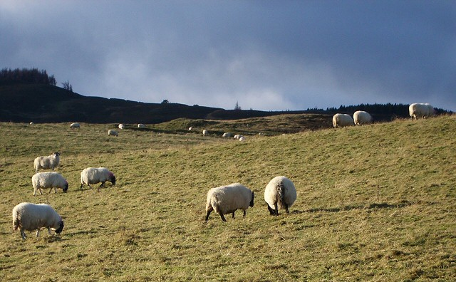 Disease fears blight early lambing season