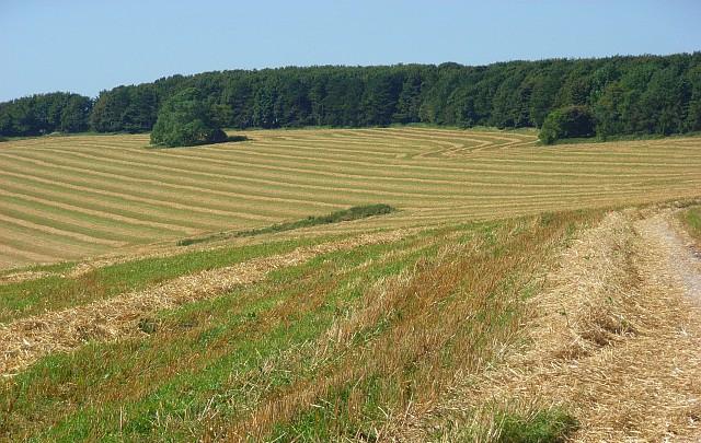 Global organic land area expands threefold