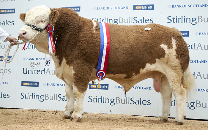 Cogent takes on Comber – the 'ultimate Simmental bull'