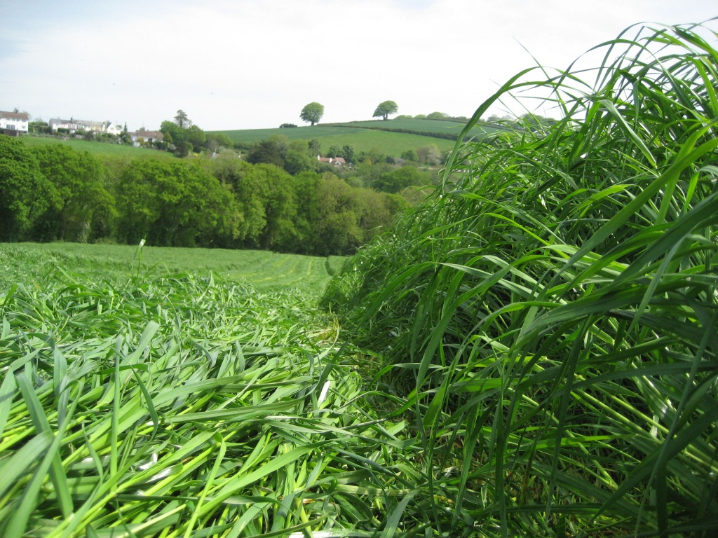 Grow forage crops to earn an income this summer