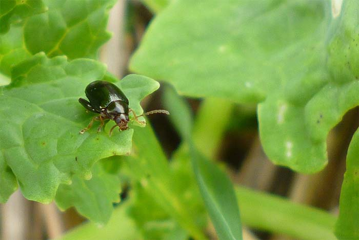 Insect pests enjoy autumn warmth