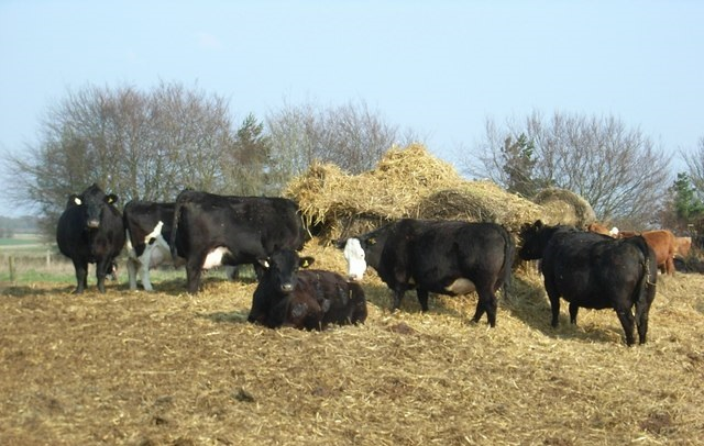 Farmer responsibility 'key to TB control', says beef association