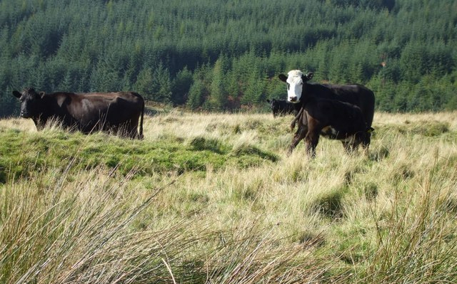 Increased risk of scour in cattle this winter