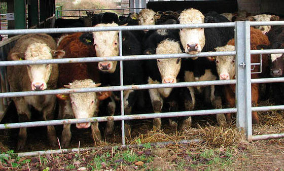 University secures grant for bovine tuberculosis research
