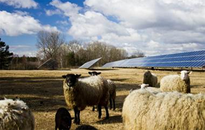 Solar farms: A taxing problem for farmers?