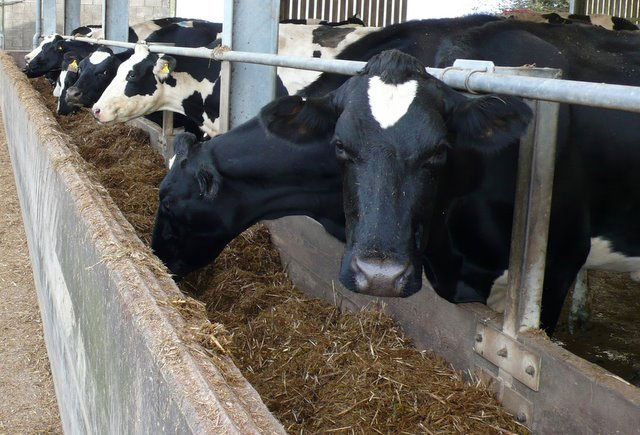 UK milk production continues to increase