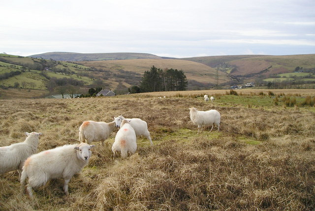 Upland sheep criticism 'unfounded', says NSA