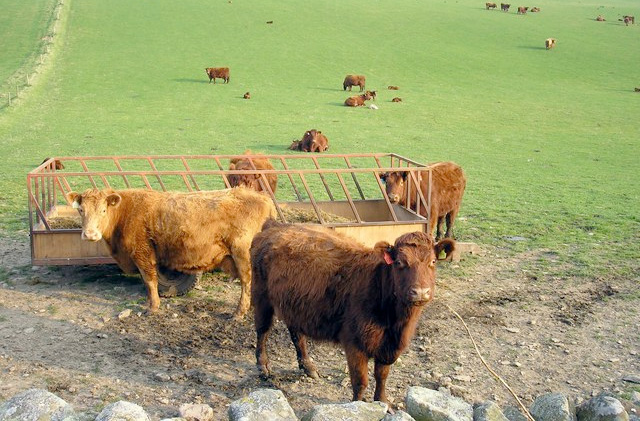 Figures show 'very little' increase in Polish beef imports