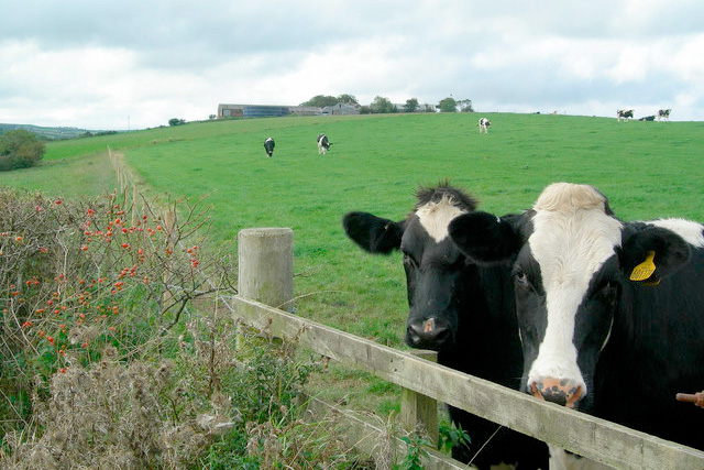 Dairy association launches training programme