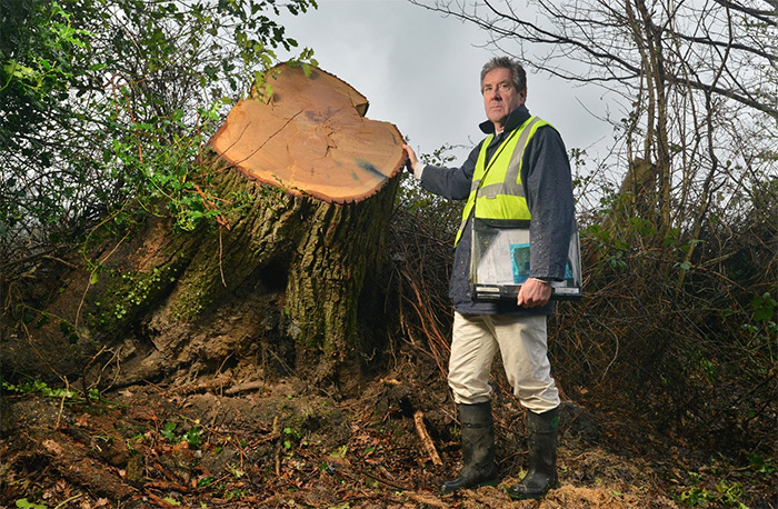 New Forest trees count the cost of months of storms