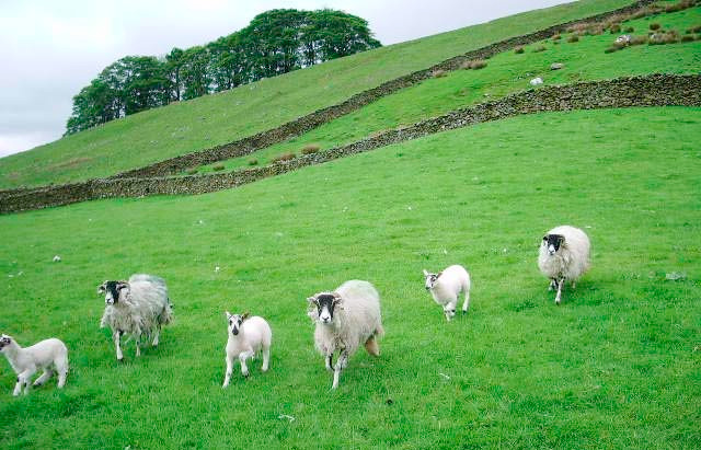 Dog owners warned on sheep worrying as Easter approaches