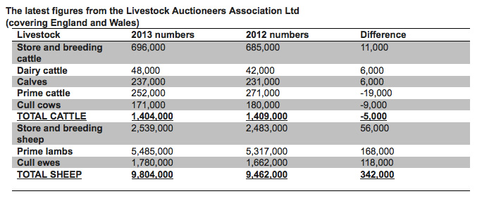 Auction markets grow as 342,000 sheep sold in 2013