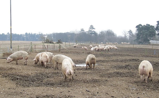 Wet winter causing explosion of worm cases in pig units