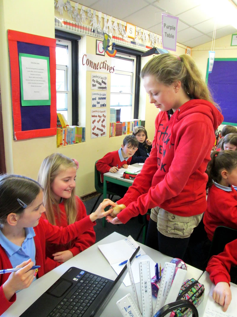 Pupils were encouraged to hold the chicks and ask questions about where free range <a href='javascript:void(0)' class='keyword' id='18' style='text-decoration:underline;color:blue' >eggs</a> came from.