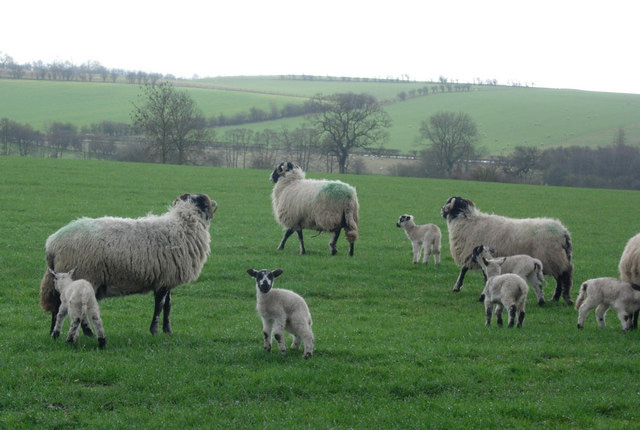Association expresses 'disappointment' over lamb meat substitution