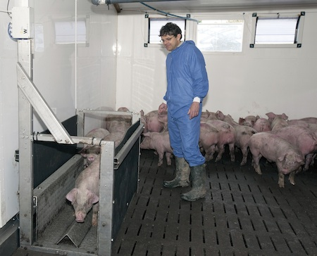 Tim Miller, environment specialist with ARM Buildings on a farm which has been evaluating the growth sensor. Pigs walk through of their own free will