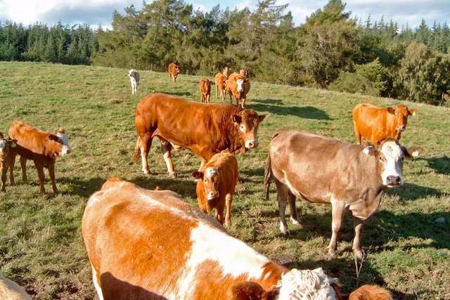 Beef farmers feel betrayed over farm gate price drop