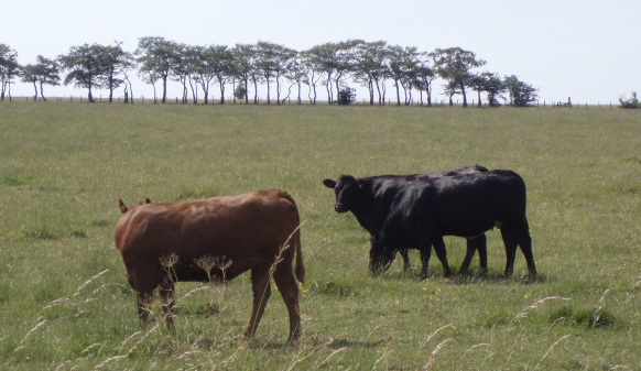Changing cattle fields to forests could tackle climate change