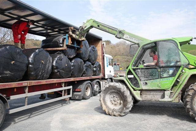 Fodder bales donated by farmers in north Ceredigion and Machynlleth bound for Somerset farms were loaded onto a D J Thomas a'i Feibion lorry at Aberystwyth livestock market.