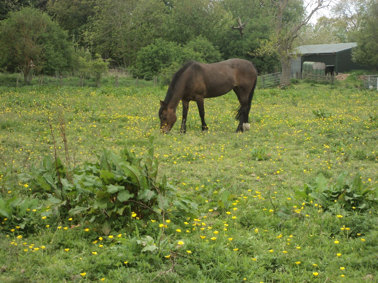 Get rid of weeds in horse paddocks for good.