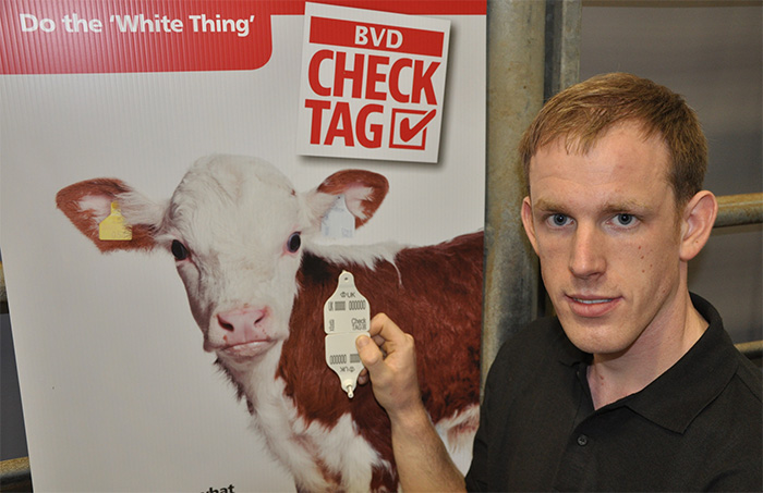 Calf testing initiative aims to eradicate BVD