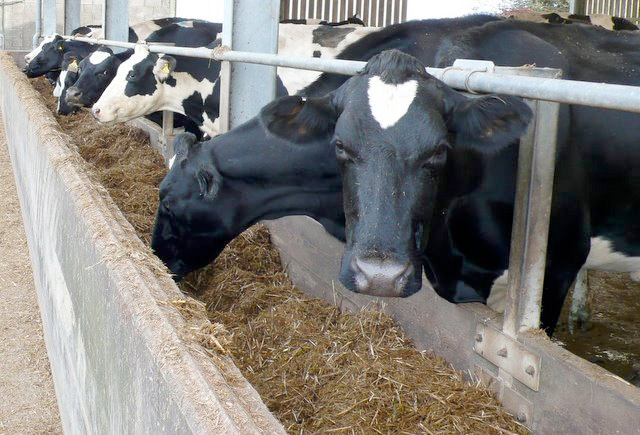 First Milk cuts price as downward dairy trend continues