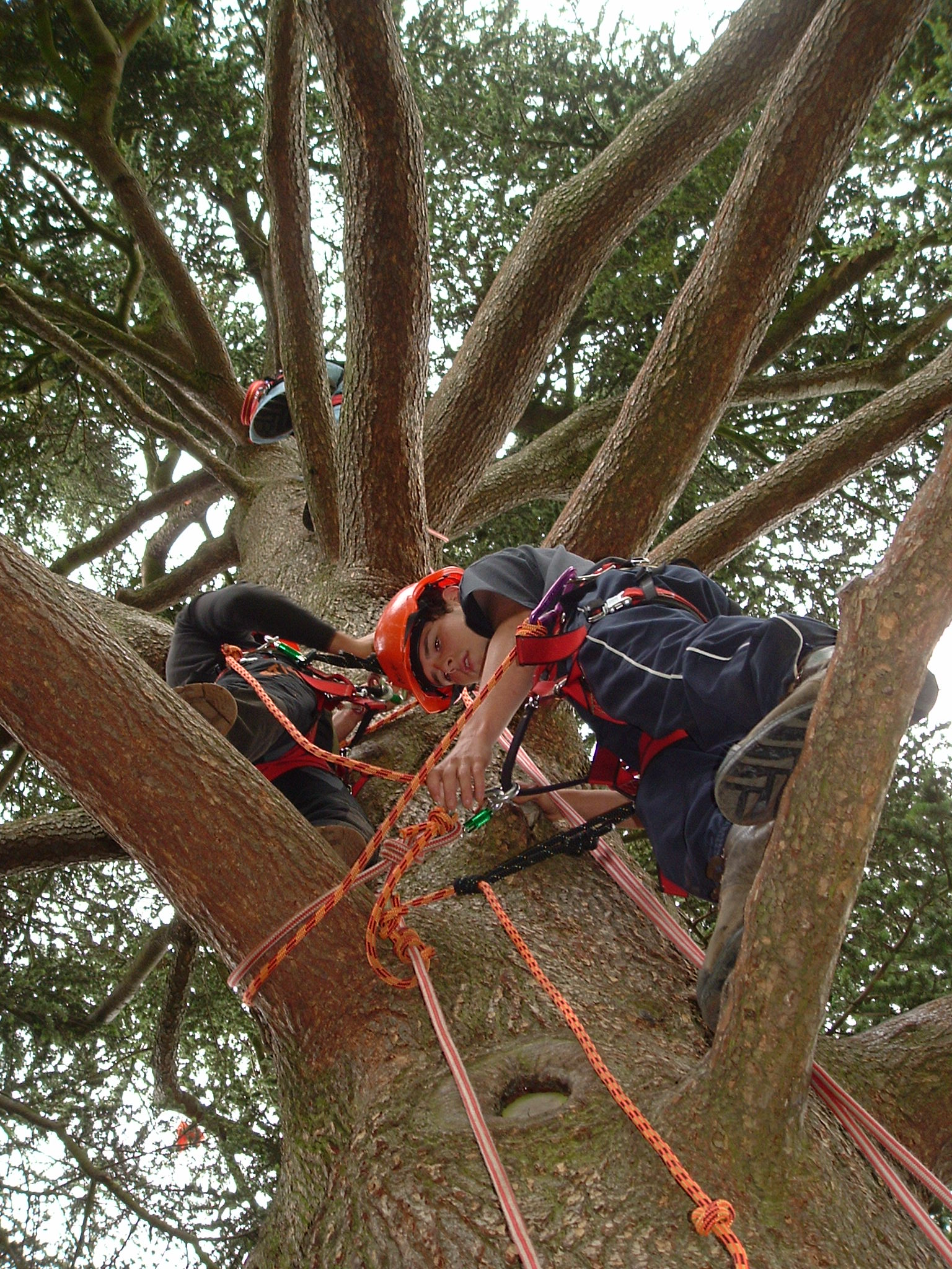 Tree climbing and arboriculture rescue demonstrations is a new feature at the Kenilworth Show