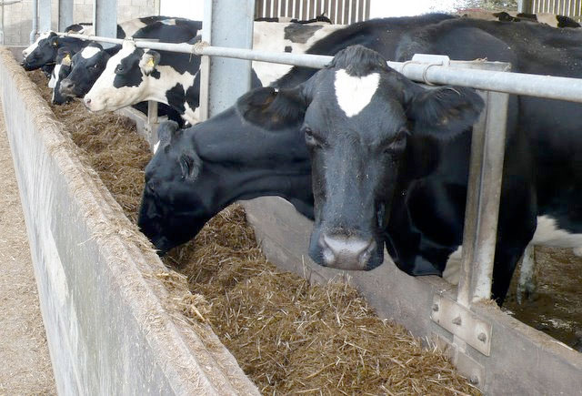 Pricing models need to be developed for dairy sector, says NFU