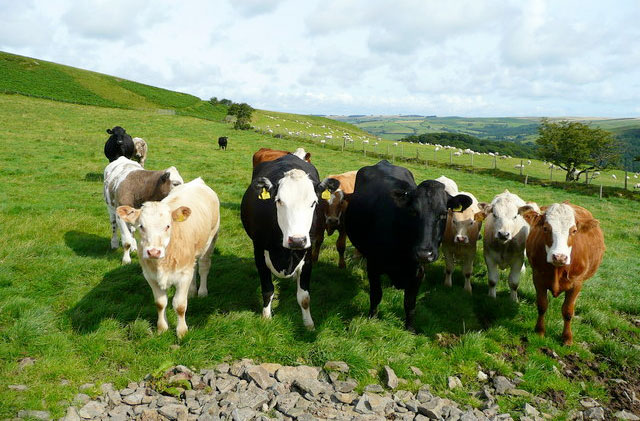 Beef 'top of the agenda' for UK farming unions