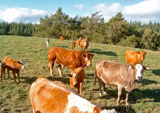 NFU meets with other farming union leaders for beef summit